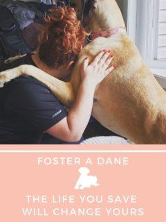 foster a dane